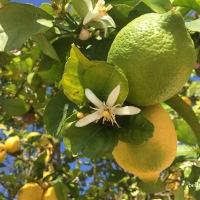 Wenn dir das Leben Zitronen gibt, mach Limonade draus.